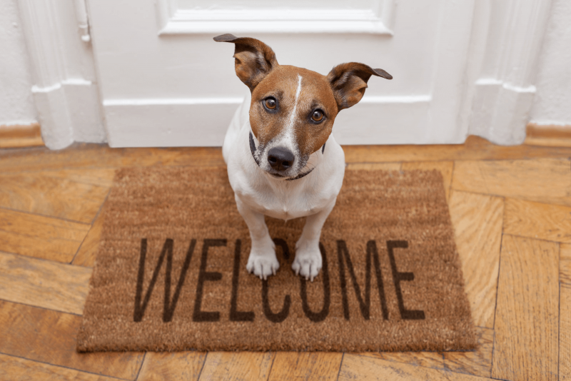 https://www.philipjames.co.uk/wp-content/uploads/2019/06/dog-welcome.png